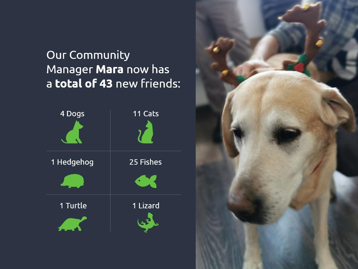 DevriX Pets in 2019